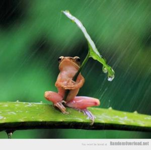 2a34funny-frog-raining-leaf-umbrella